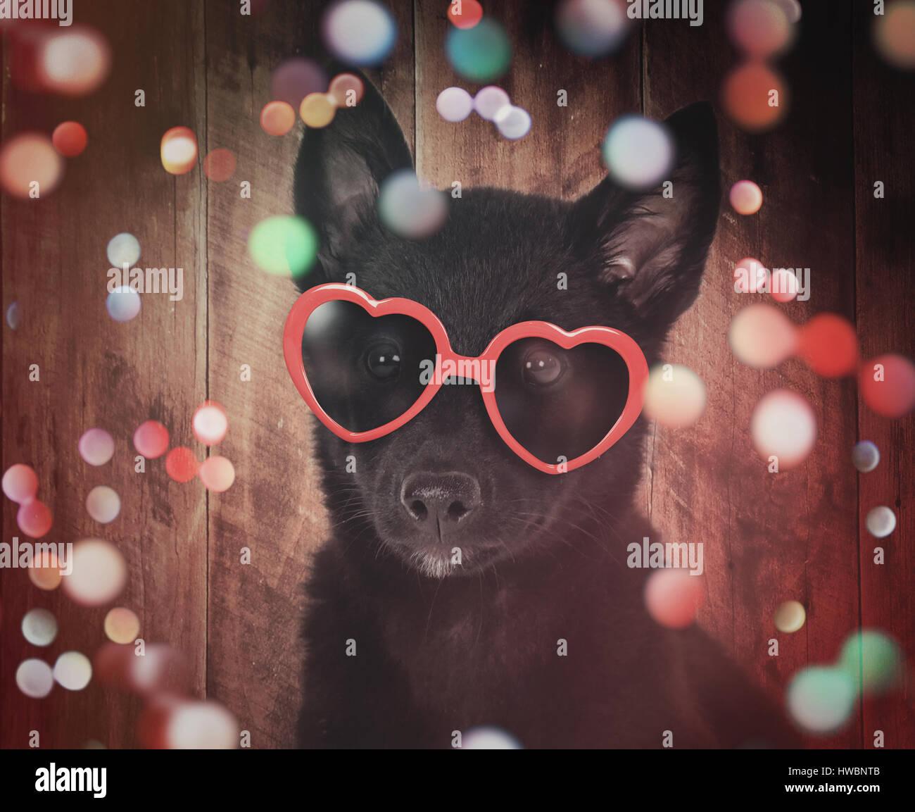 Un mignon petit chien noir avec lunettes coeur rouge est sur un fond de bois coloré avec sparkles autour de l'animal pour une fête ou célébration concept. Banque D'Images