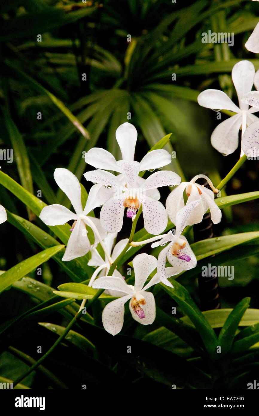 Fleur Blanche D Orchidees Tropicales Hybride Jardins Botaniques De