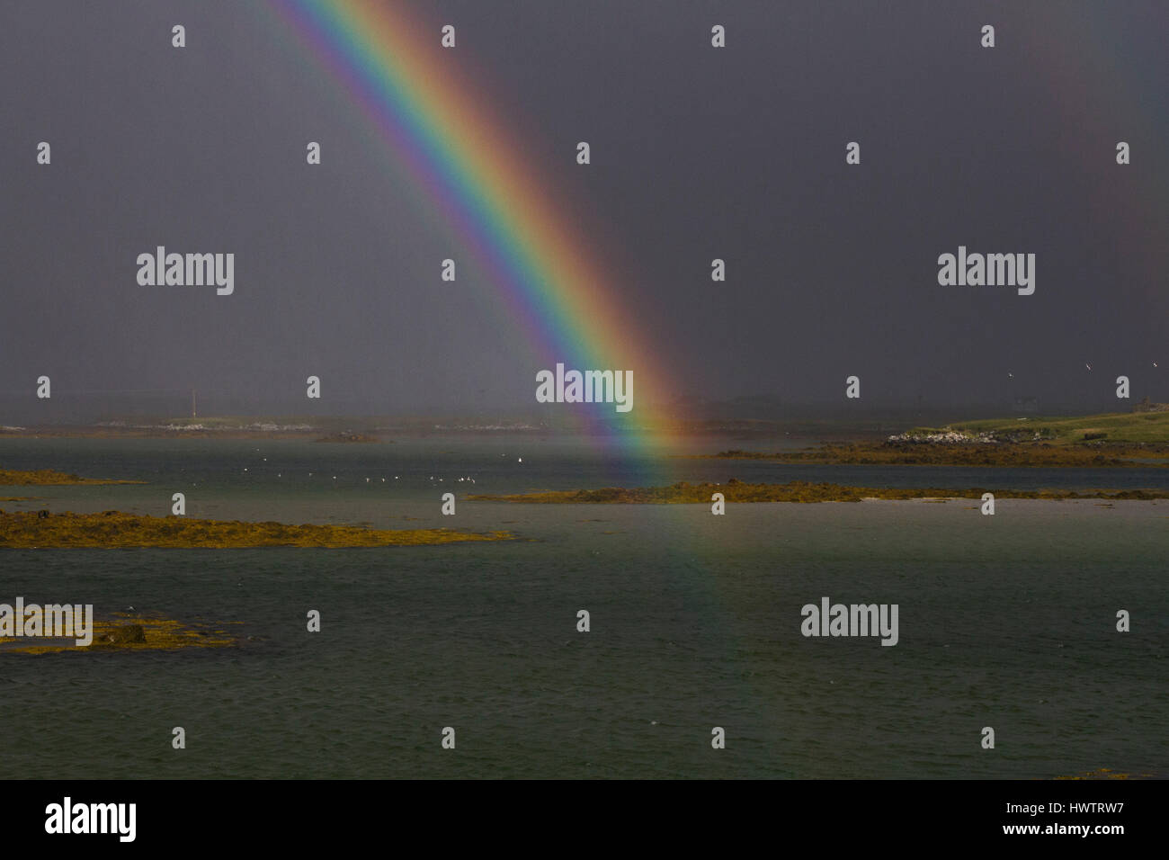 La Sterne arctique (Sterna paradisea) voler à travers le loch de mer avec rainbow, migraating sud à la Photo Stock