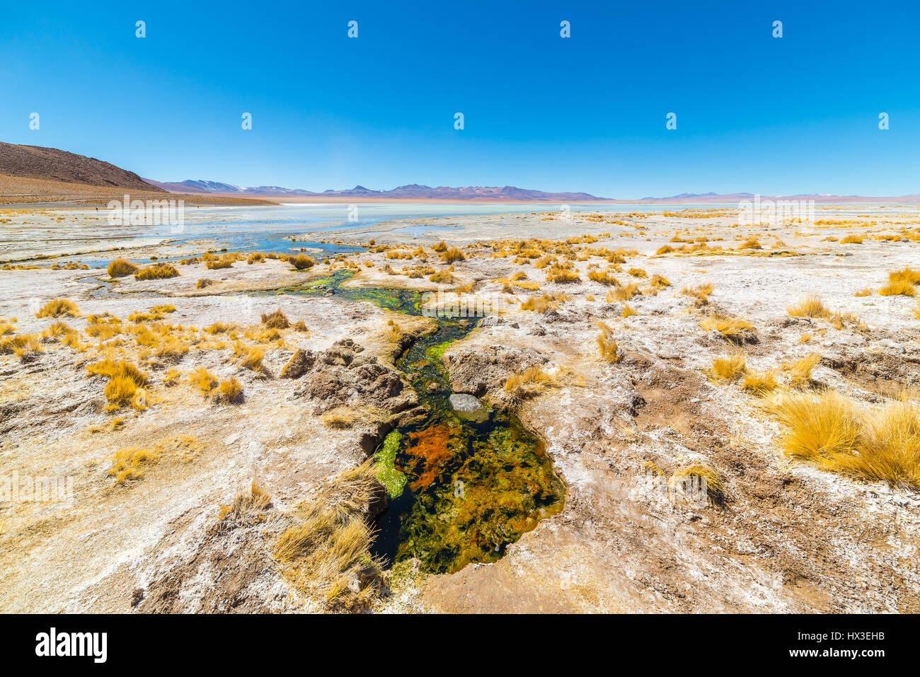 Hot spring colorés avec des dépôts de minéraux et algues sur les hauts plateaux andins (Bolivie). Photo Stock
