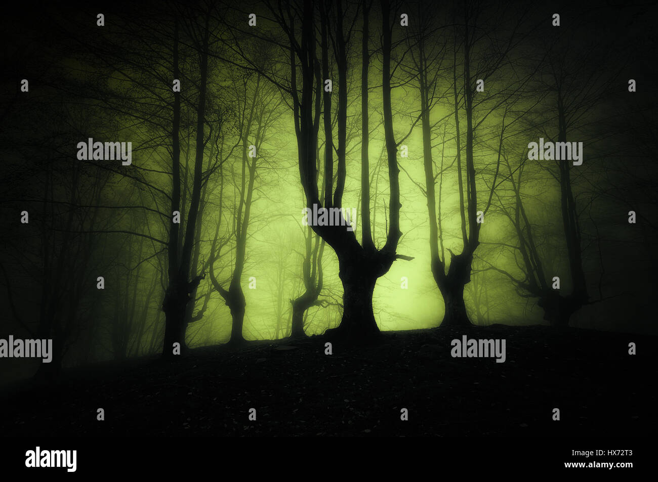 Sombre forêt avec arbres effrayant Photo Stock