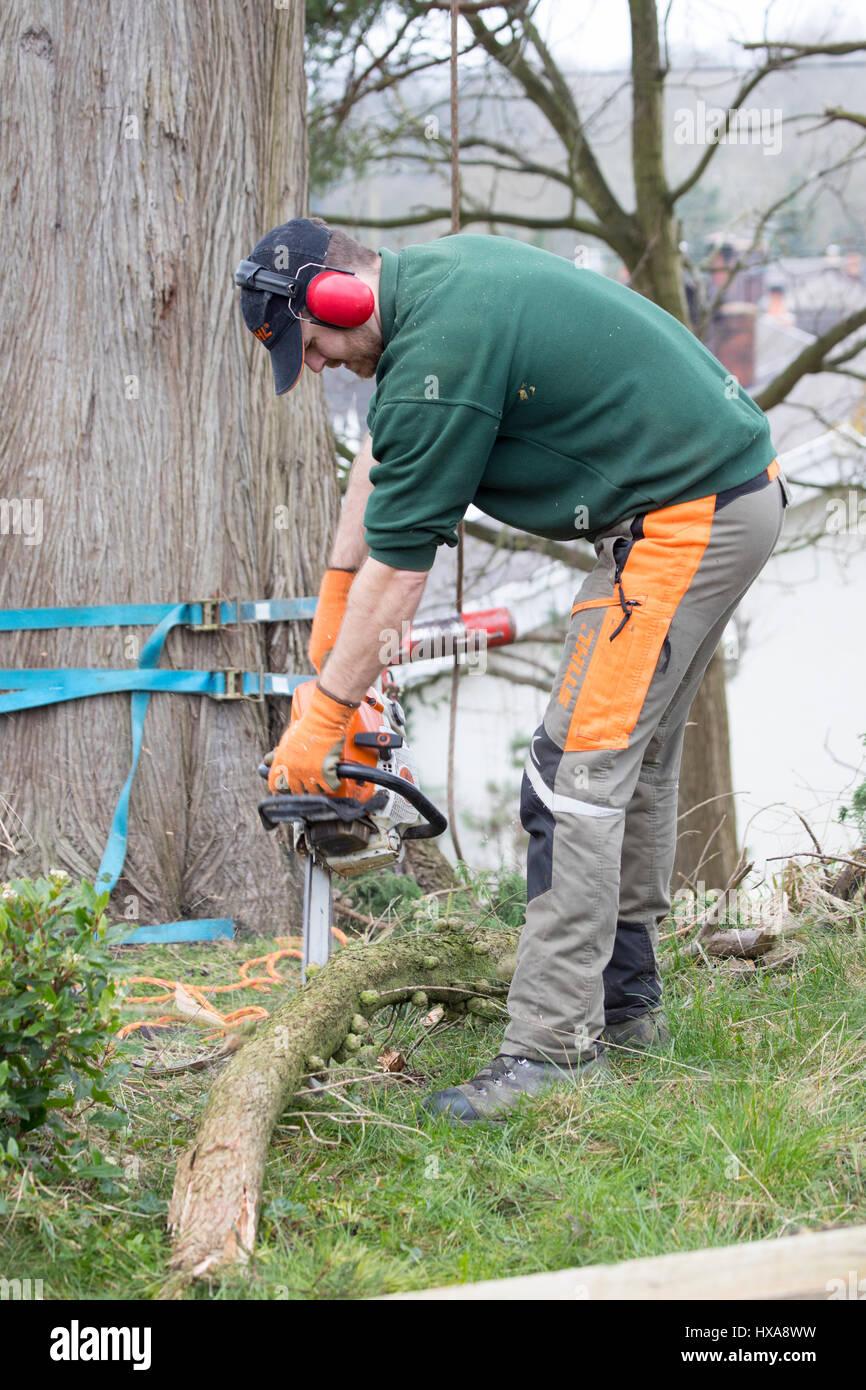 Tree surgeon cutting branches photos tree surgeon cutting branches images alamy - Couper des arbres sur son terrain ...