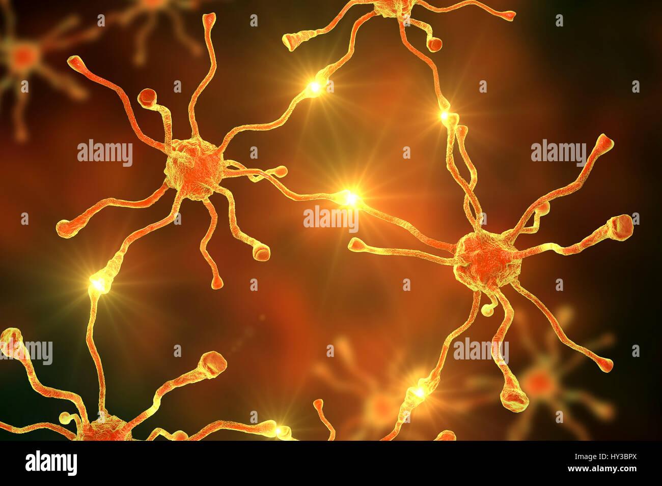 Les cellules nerveuses, ou neurones, dans le cerveau humain, l'illustration de l'ordinateur. Photo Stock