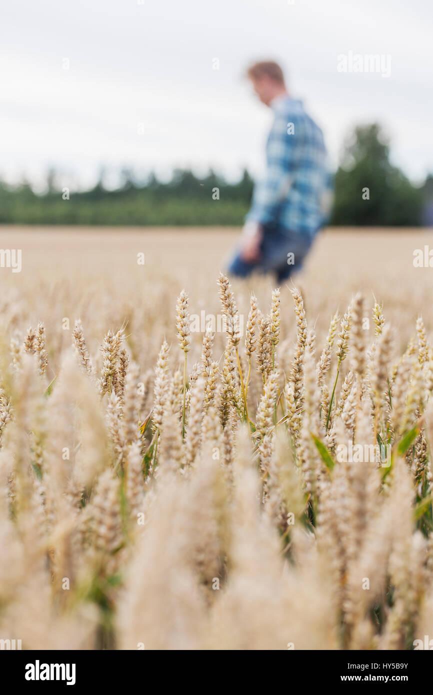 La Finlande, uusimaa, siuntio, Mid adult man walking in wheat field Photo Stock