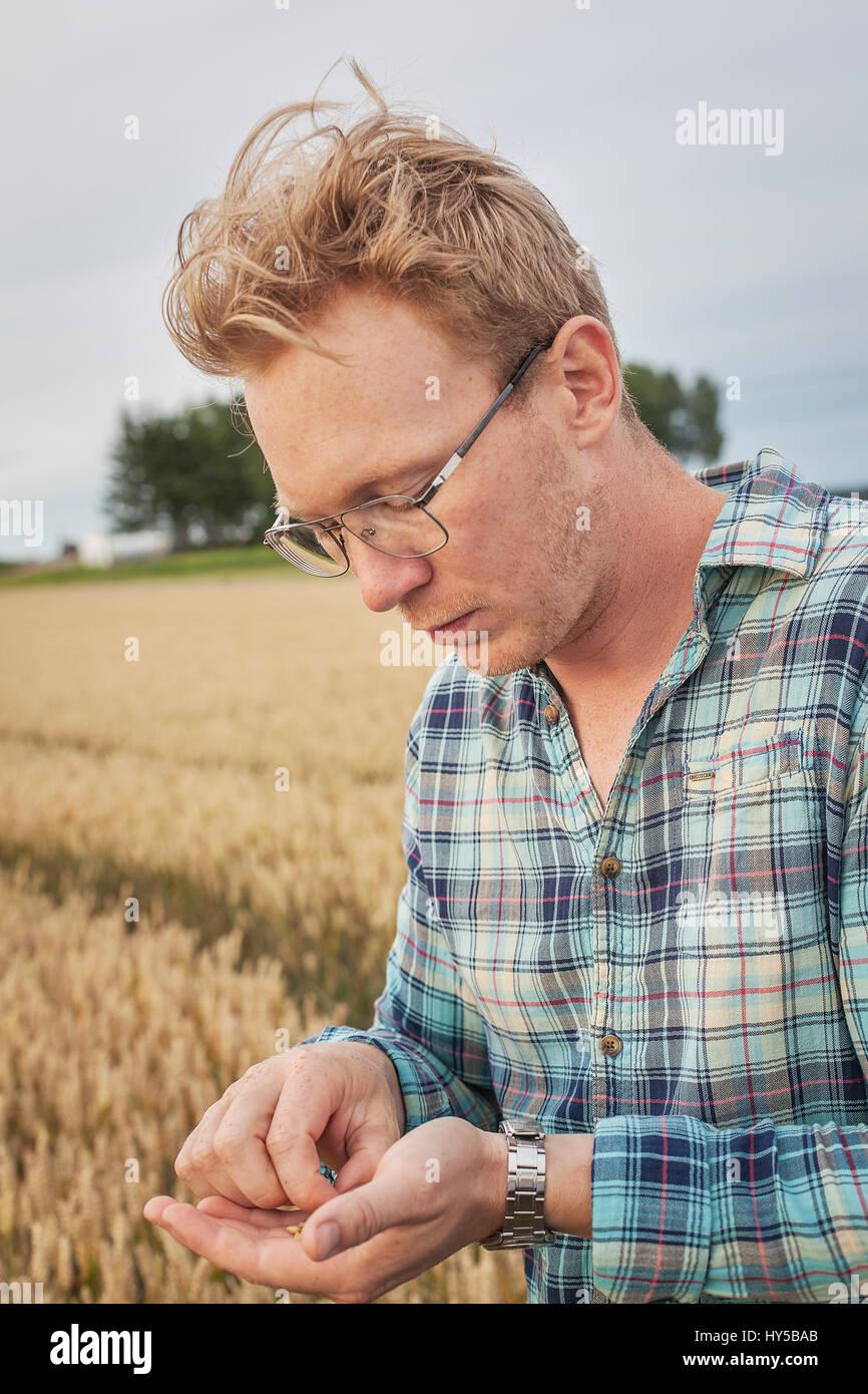 La Finlande, uusimaa, siuntio, Mid adult man holding grain de blé Photo Stock