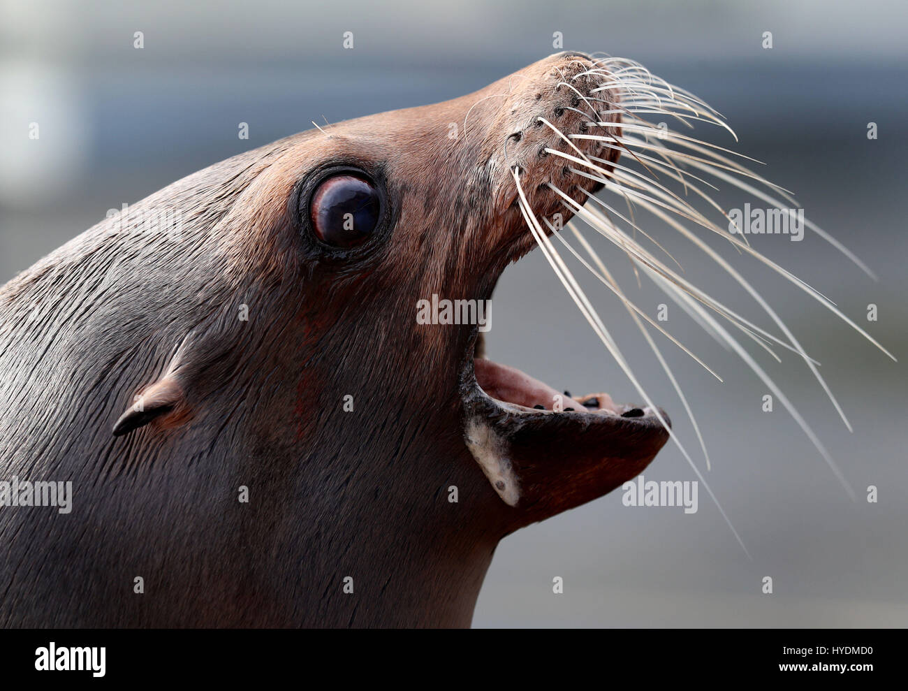 Operation Sealion Photos & Operation Sealion Images - Alamy