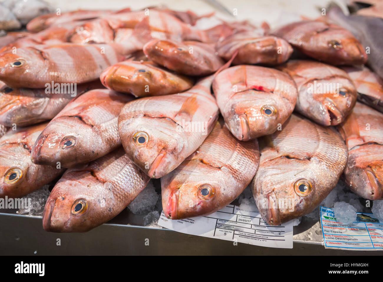 Poissons frais du marché aux poissons à Cadix, Andalousie, Espagne Photo Stock