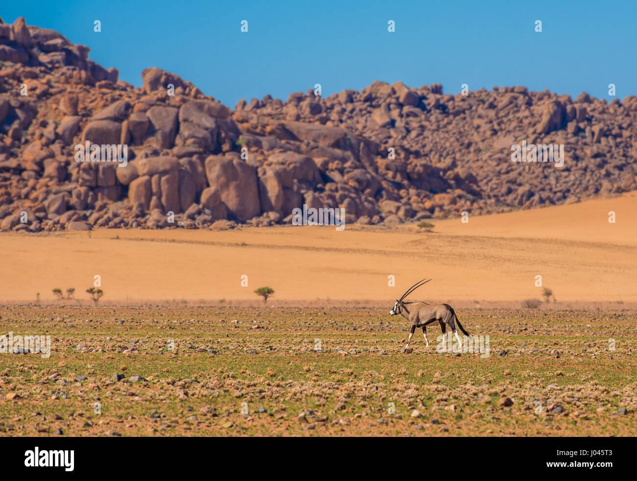 Dans l'antilope oryx Namib-Naukluft national park, Namibie Photo Stock