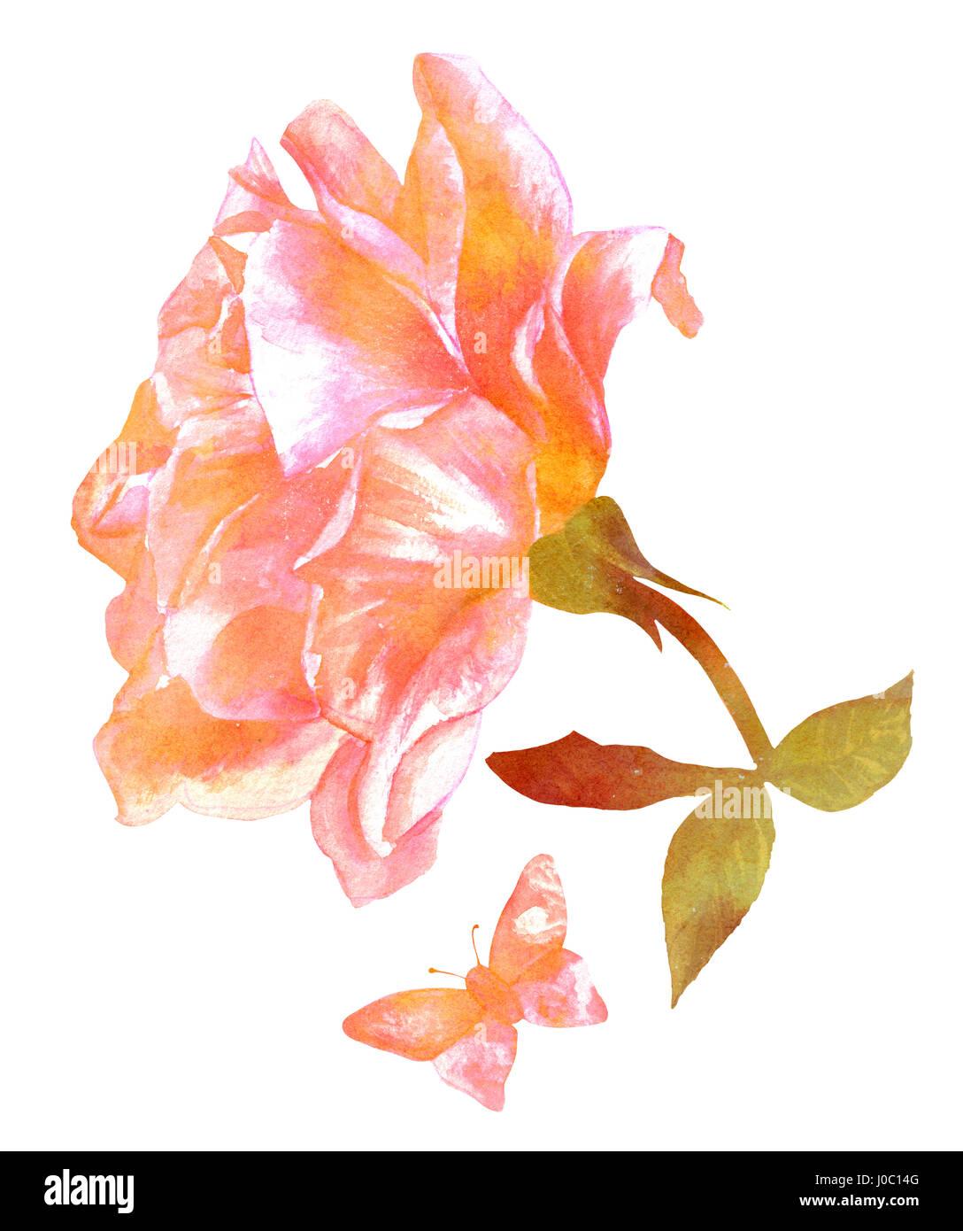 Tons rose et or fleur rose avec papillon aquarelle dessin - Image papillon et fleur ...