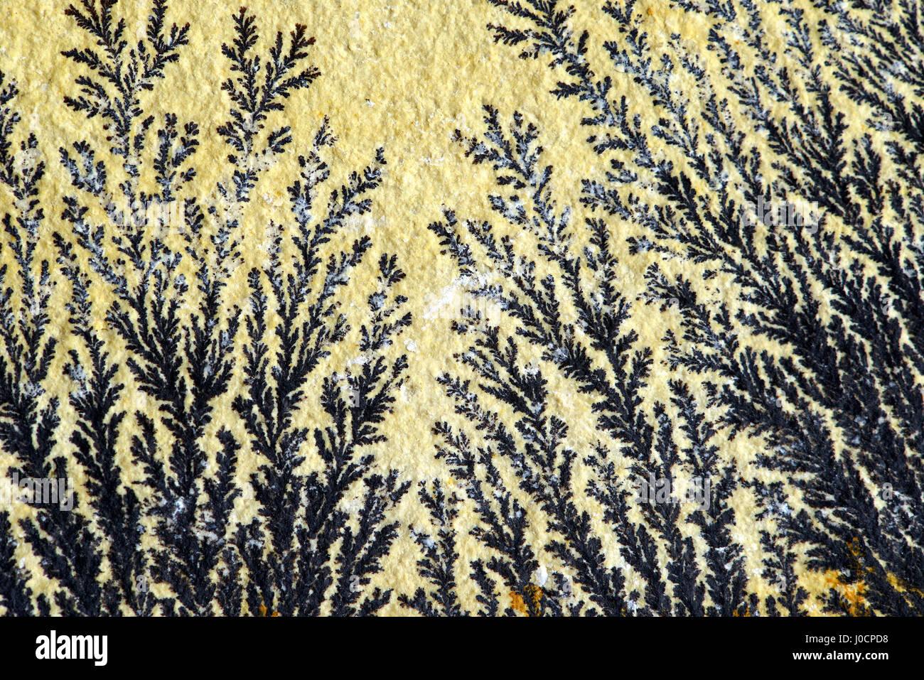 Dendrite en roche calcaire. trouvé dans la solnhofen (Allemagne) Photo Stock