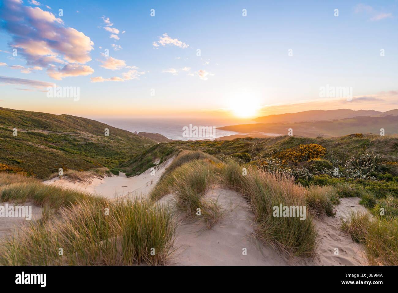 Coucher de soleil sur la mer, les dunes, la baie de phlébotome, Dunedin, Otago, péninsule d'Otago, Southland, Nouvelle Banque D'Images