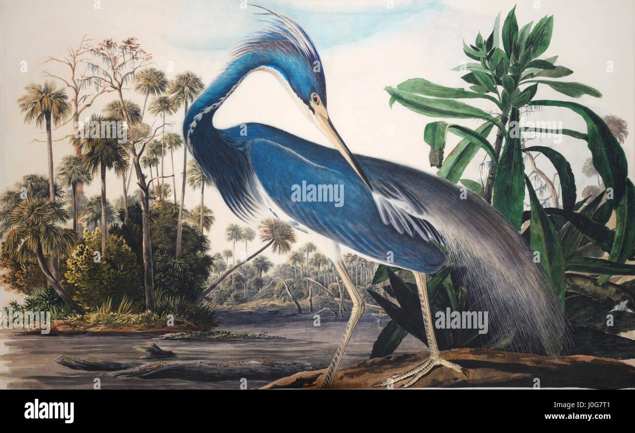 John James Audubon - fromTricolored détails peinture oiseau Heron, Étude pour Havell, préparatoire Photo Stock
