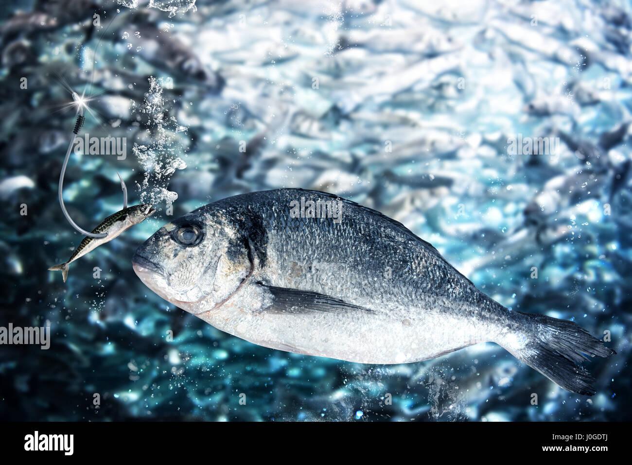 Le poisson prend l'appât pour attirer Photo Stock