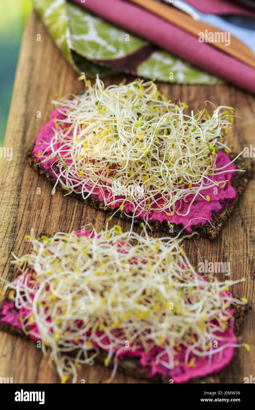 Le pain de seigle avec des pousses et de crème de betteraves Photo Stock