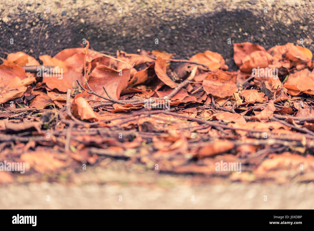 Les feuilles sèches et tombé sur une rue à côté de trottoir à l'automne ou à l'automne à Vancouver, Canada. Banque D'Images