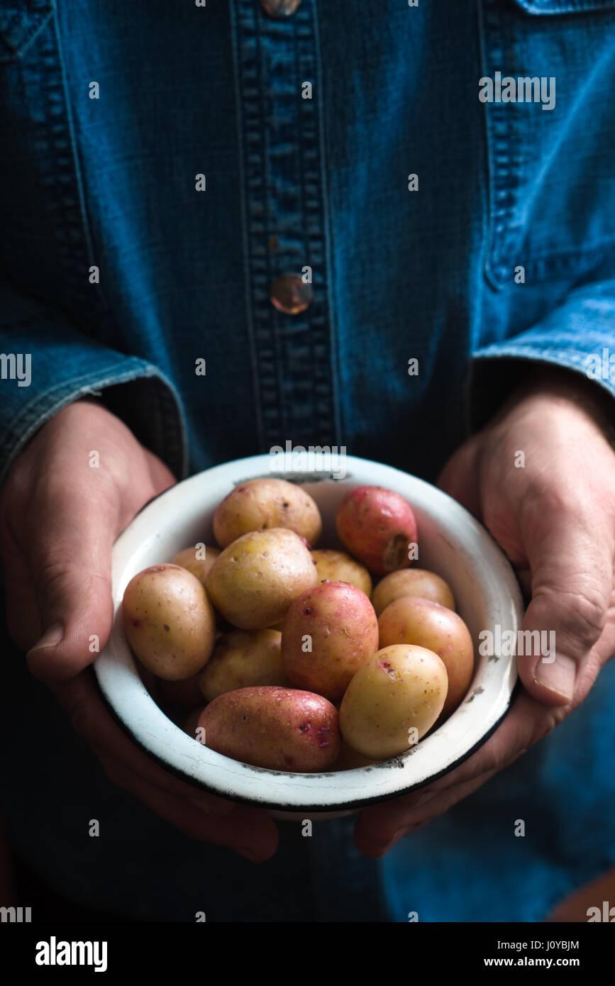 Les mains avec les pommes de terre crues dans le bol en métal Photo Stock