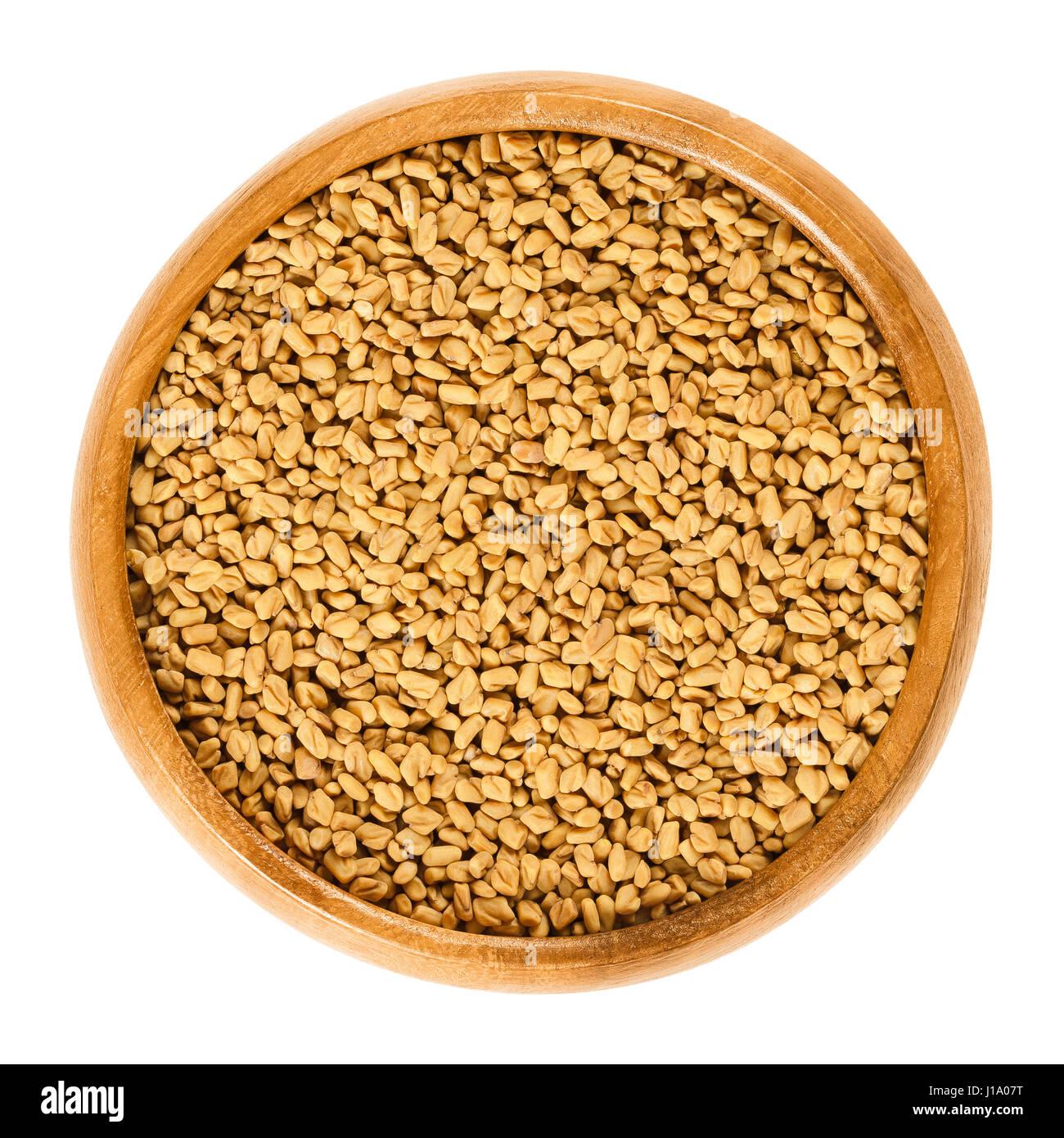 Faire Germer Un Marron D Inde graines en germination photos & graines en germination