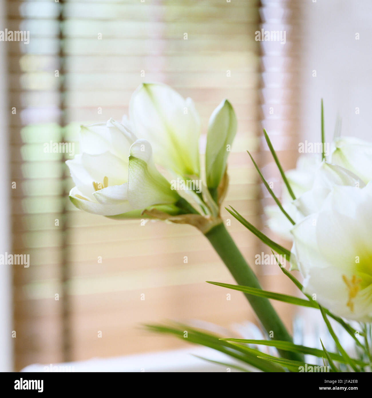 Close up of white flowers. Photo Stock