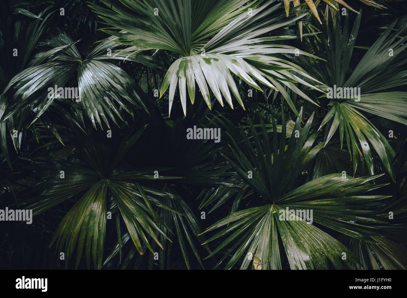 Les plantes dans la forêt amazonienne près de Belém, Pará, Brésil Photo Stock