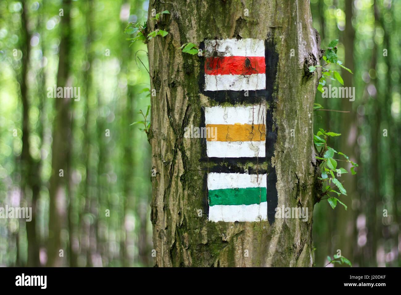 Rouge, jaune et vert signe touristique sur l'arbre dans la forêt Banque D'Images
