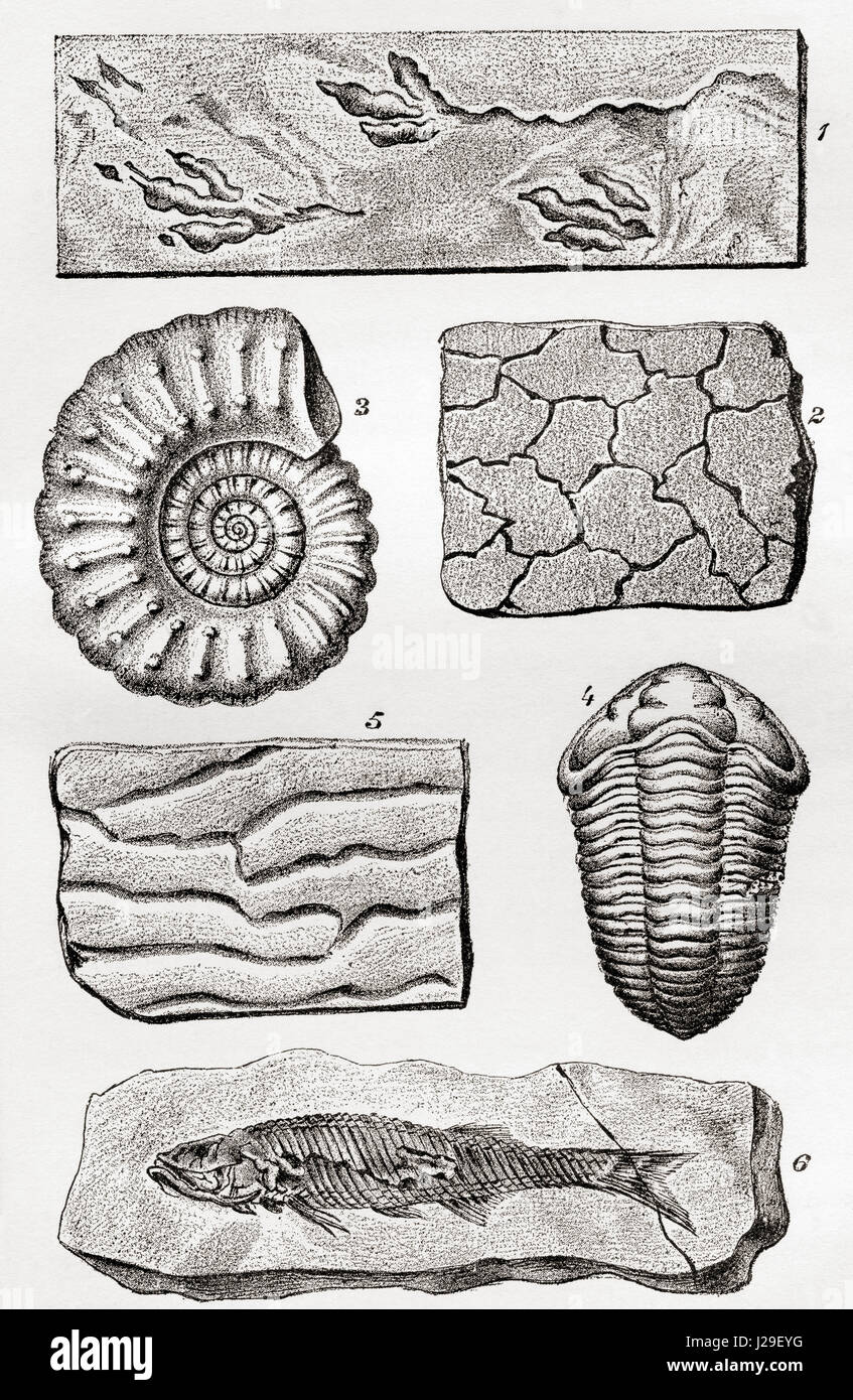 Les fossiles. 1. Traces de l'oiseau. 2. Mudcracks. 3. Ammonite. 4. Trilobite. 5. Ripplemarks. 6. Le poisson. Photo Stock