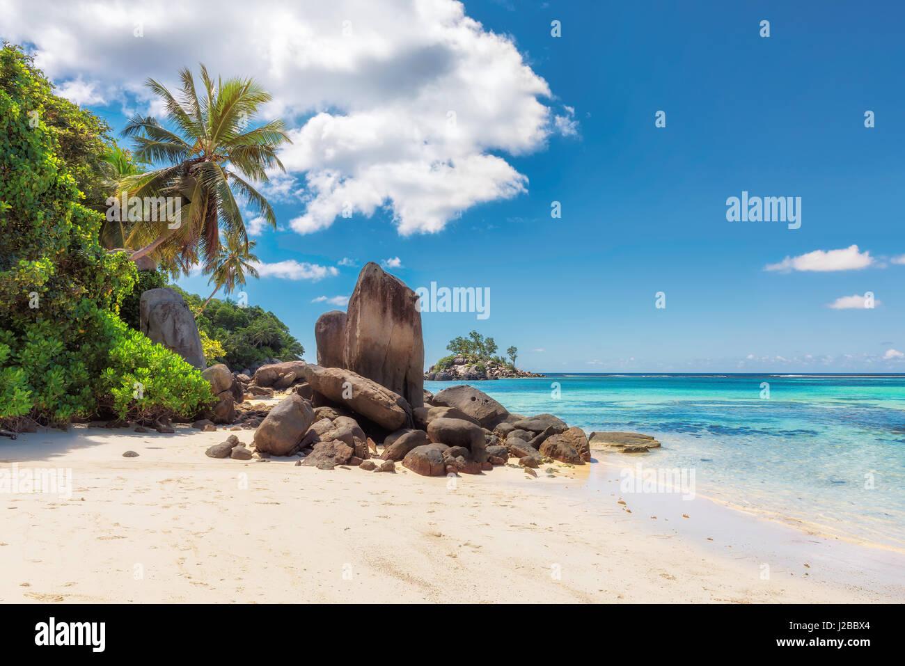 Palmiers et rochers sur une plage de sable blanc, l'île de Mahé, Seychelles Photo Stock