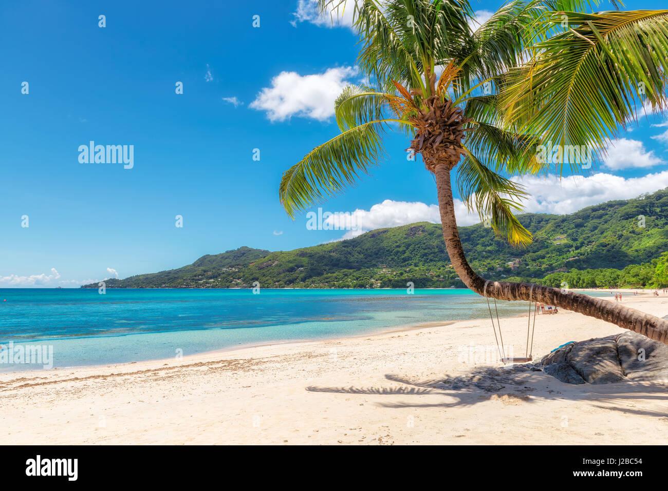 Vue sur la magnifique plage de Beau Vallon avec coconut palm tree sur l'île de Mahé, Seychelles. Photo Stock
