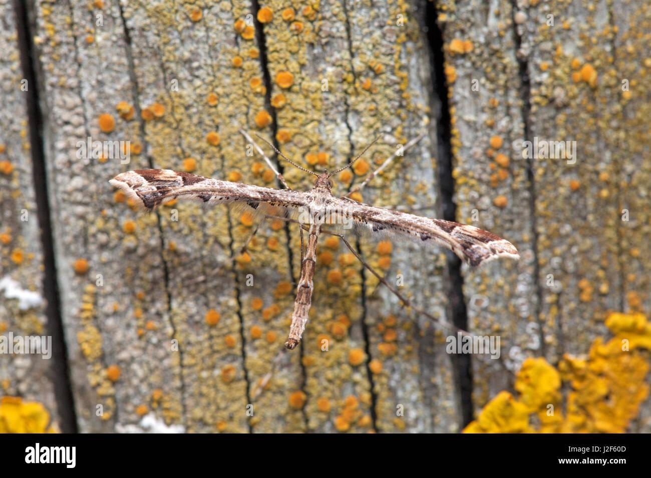Panache triangle sur bois Photo Stock