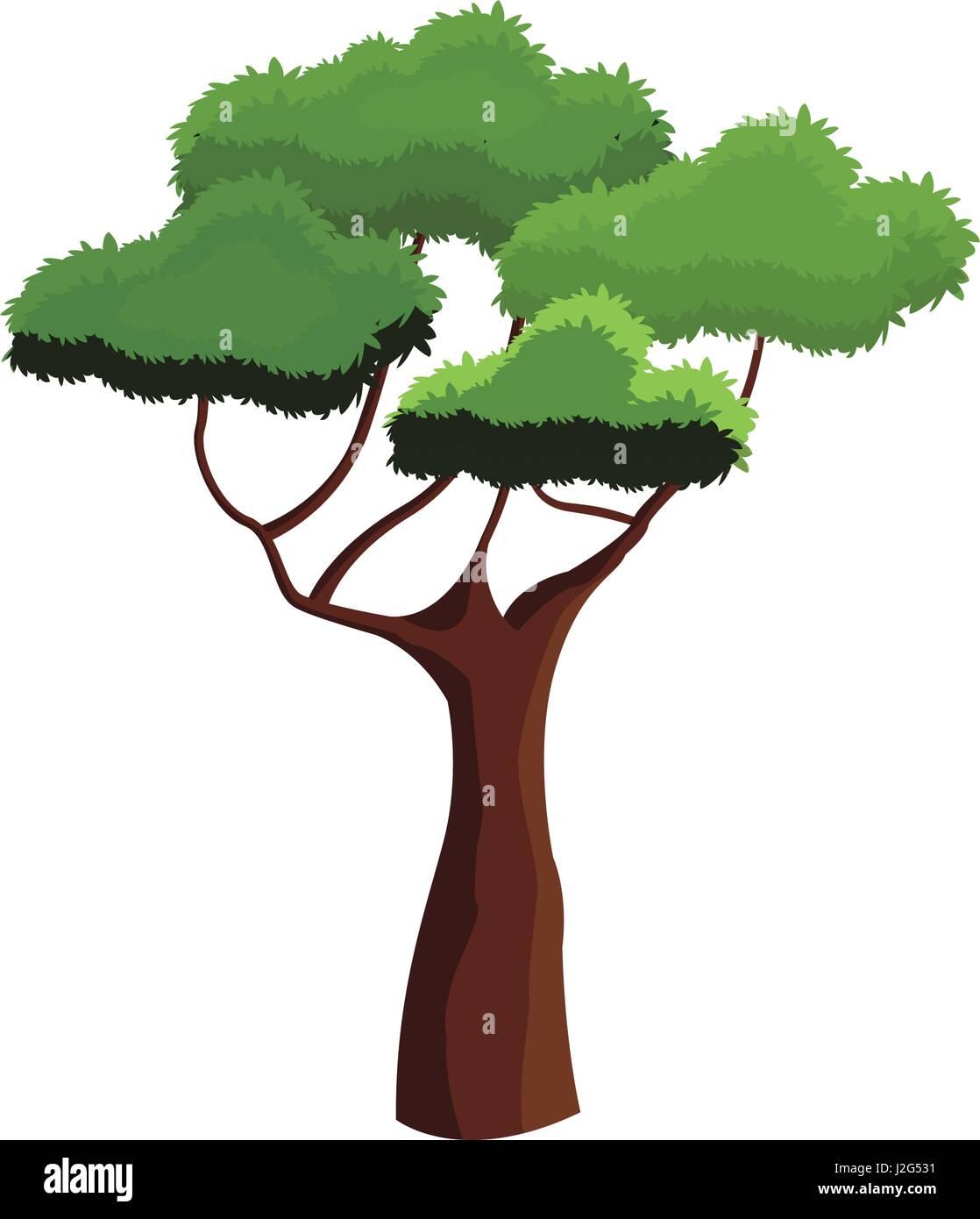 Le feuillage de l'arbre d'Afrique de l'écosystème haut sur fond blanc Photo Stock