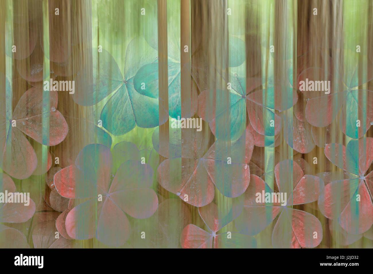 L'État de Washington, USA, Seabeck. Collage d'oxalis et arbres. En tant que crédit: Don Photo Stock