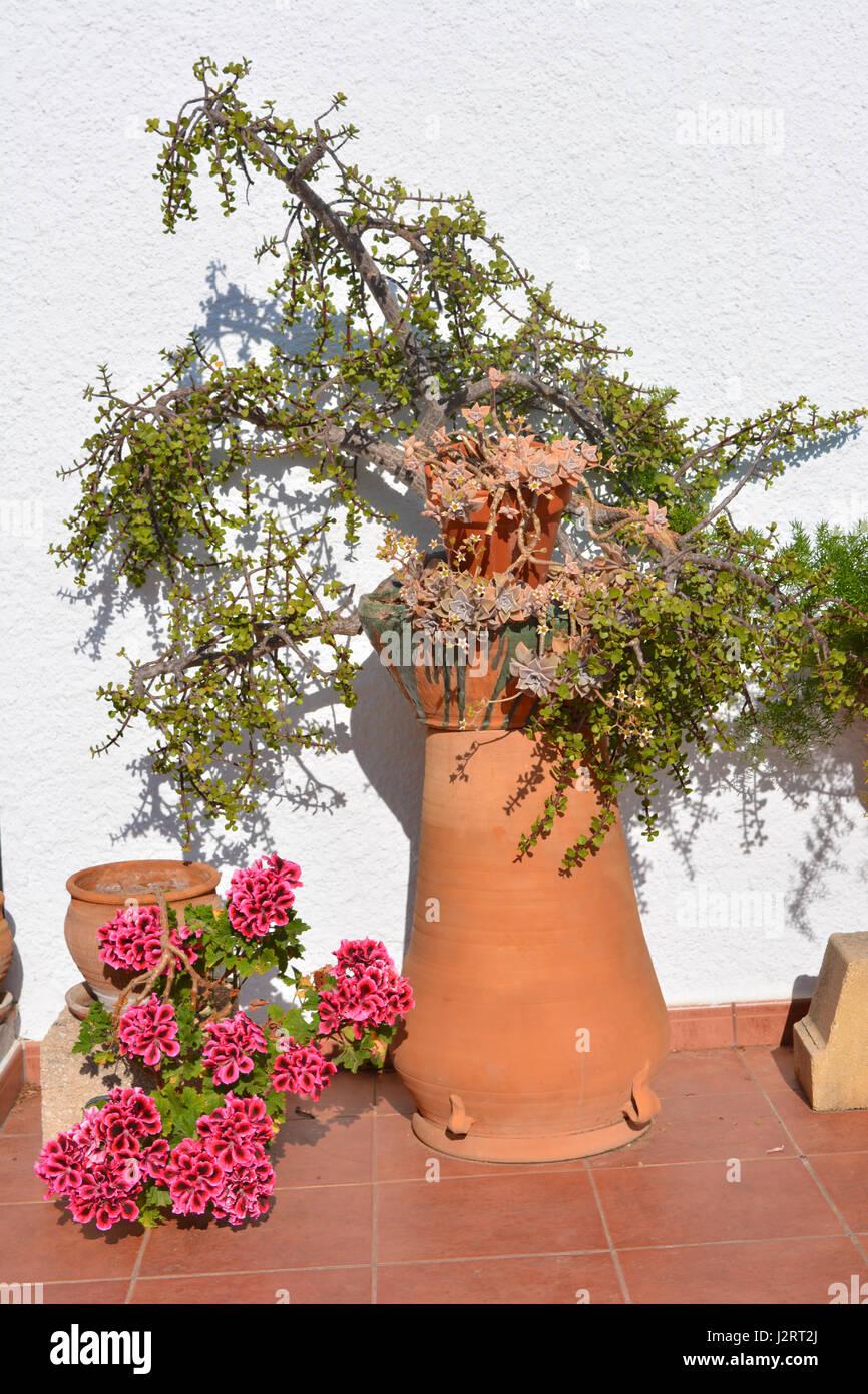 Arbre En Pot Terrasse plantes en pot sur une terrasse ensoleillée, y compris un