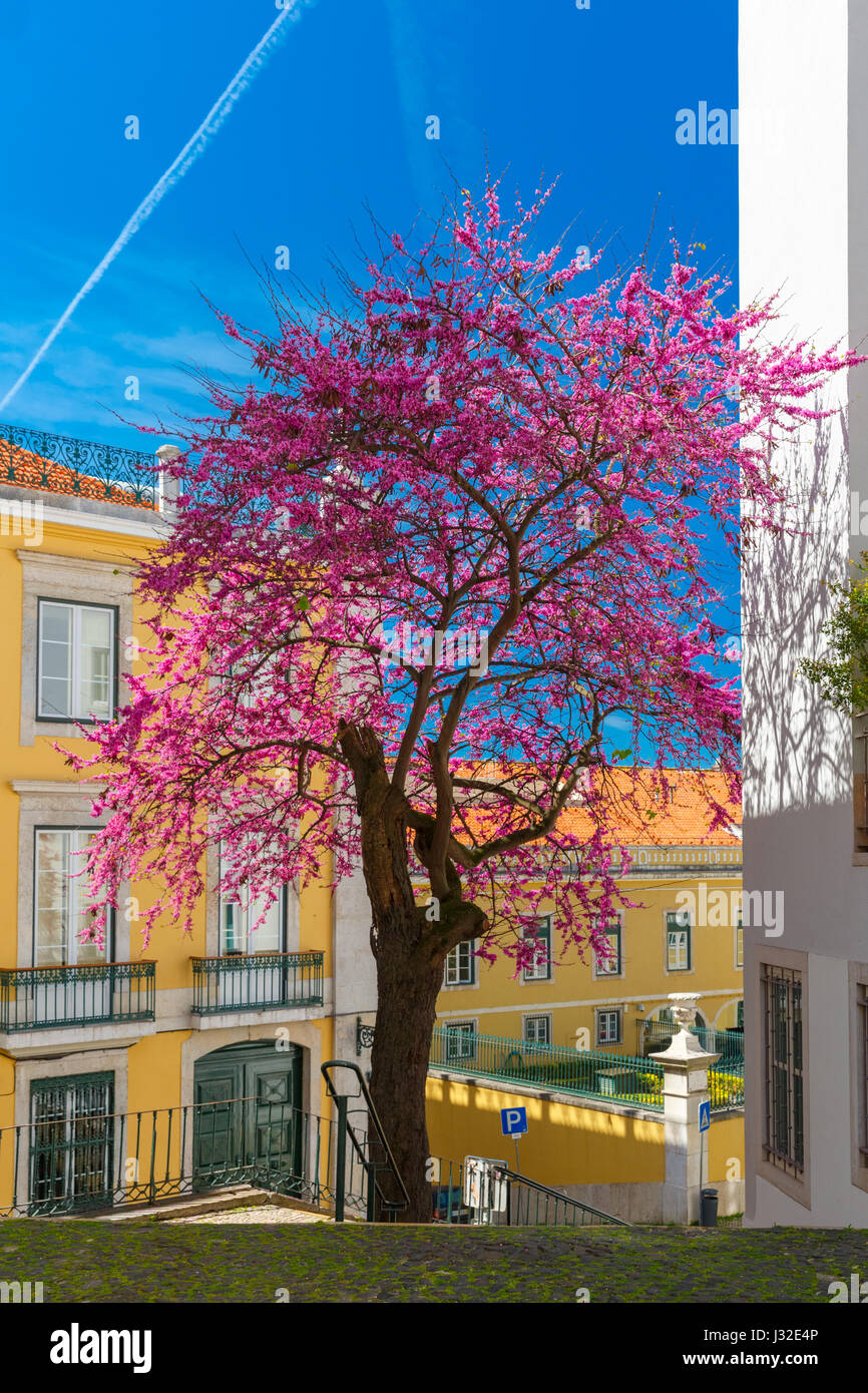Spring street, typique de Lisbonne Portugal Photo Stock