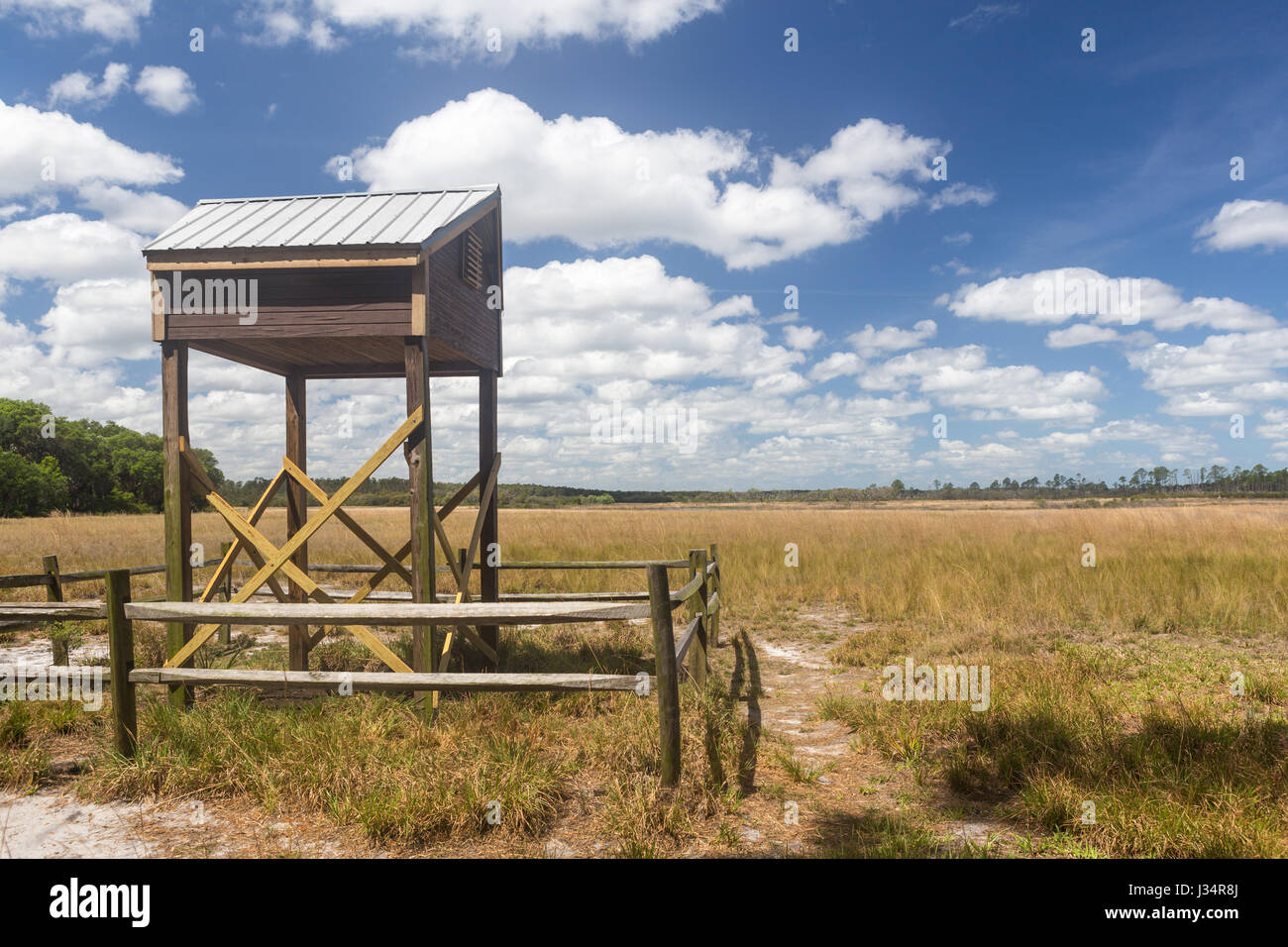 Un bat house dans Hopkins Prairie en forêt nationale d'Ocala en Floride. Photo Stock