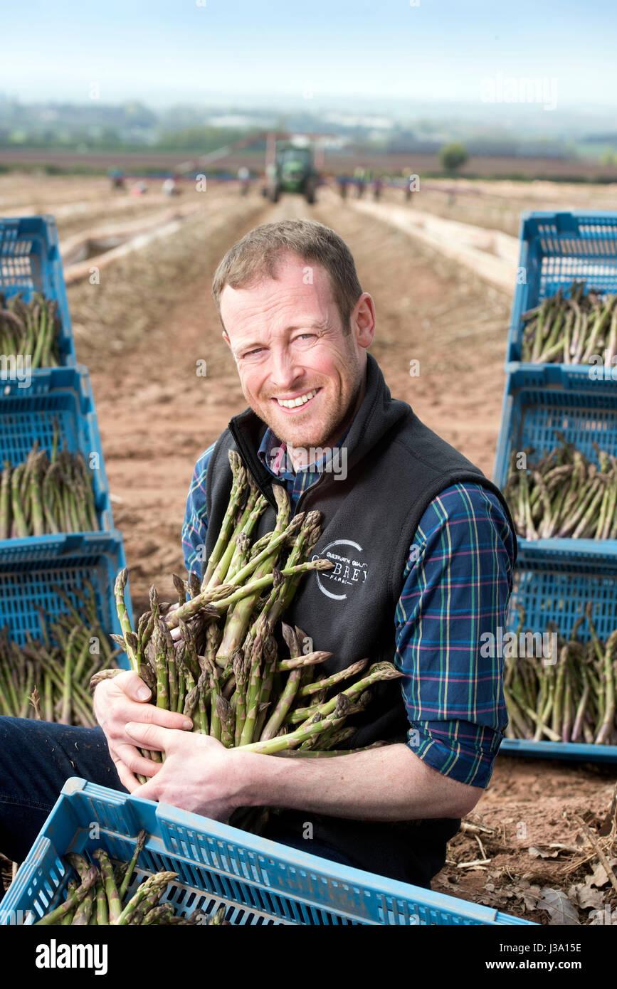 Chris Farmer asperges Chinn de Cobrey ferme près de Ross-on-Wye avec certains de sa récolte qui est arrivé Photo Stock