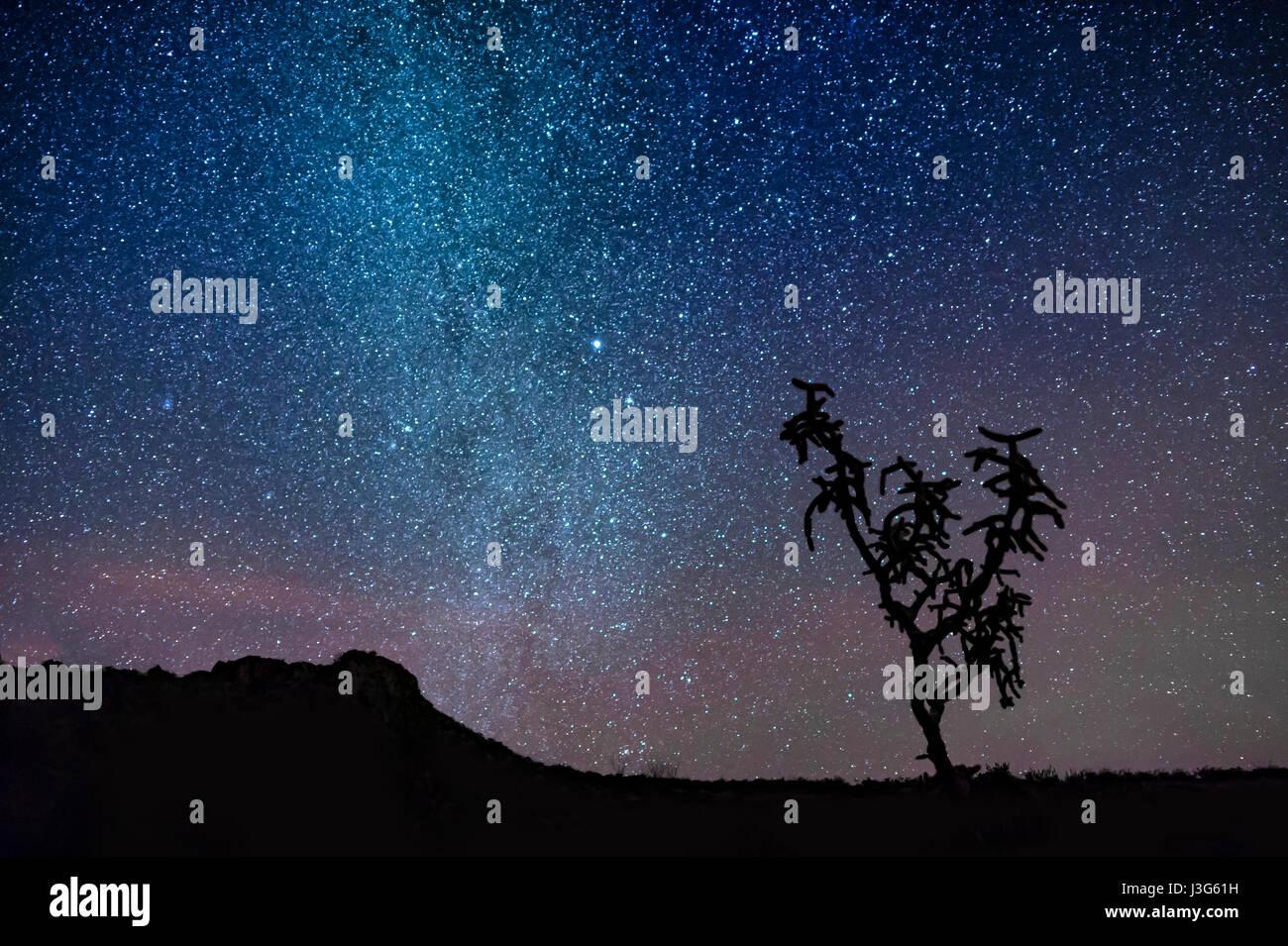 Ciel du désert avec des étoiles et silhouette de cactus Photo Stock