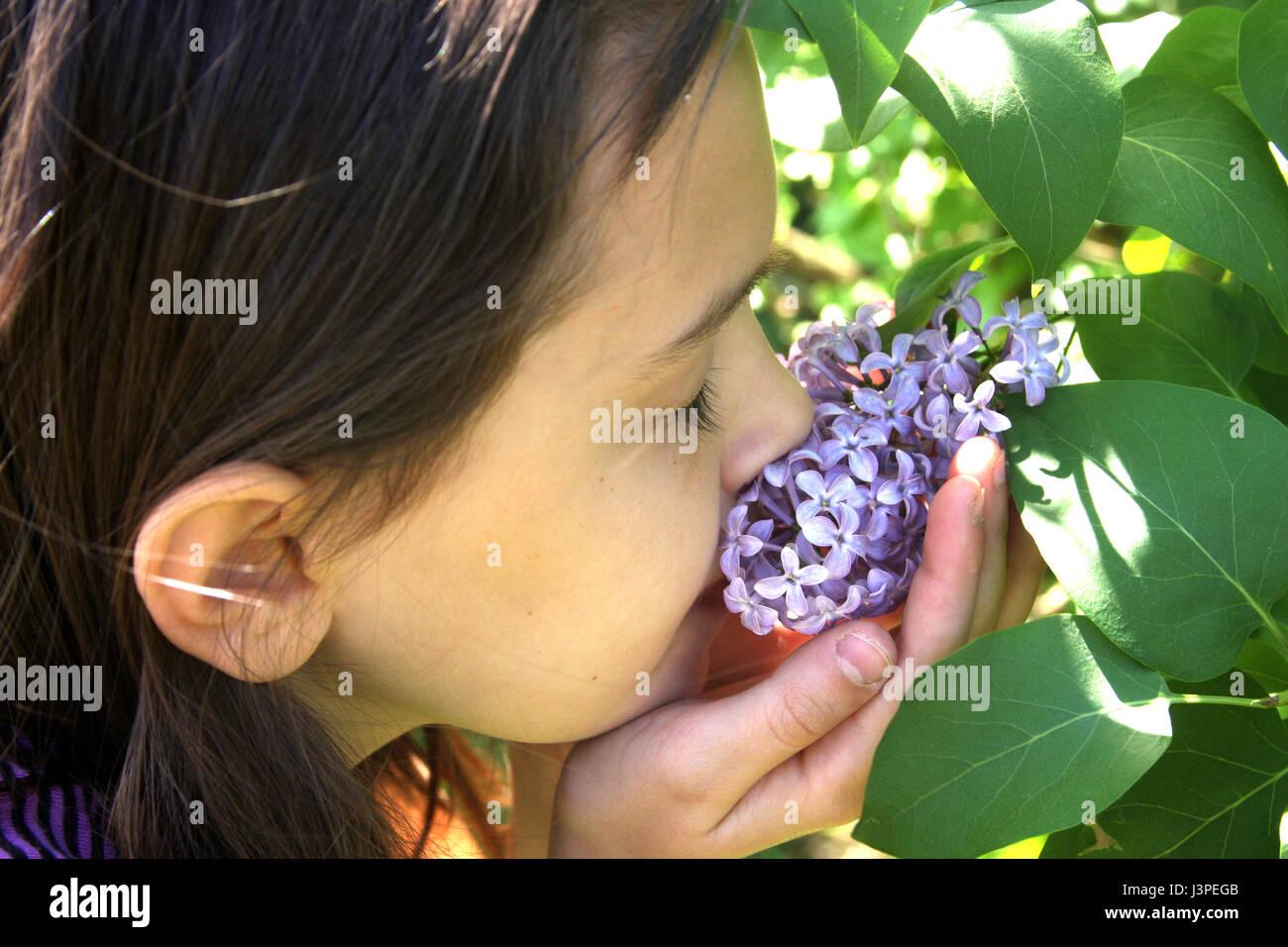 b1834ae3911ef Petite fille qui sent le lilas fleur dans le jardin Banque D Images ...