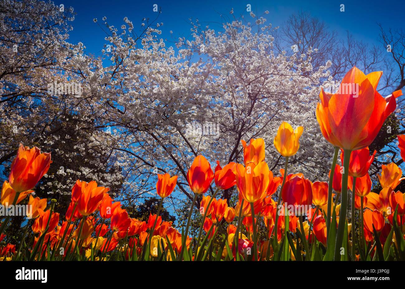 Le Dallas Arboretum and Botanical Garden est un jardin botanique de 66 hectares situé au 8617 route de l'est Photo Stock