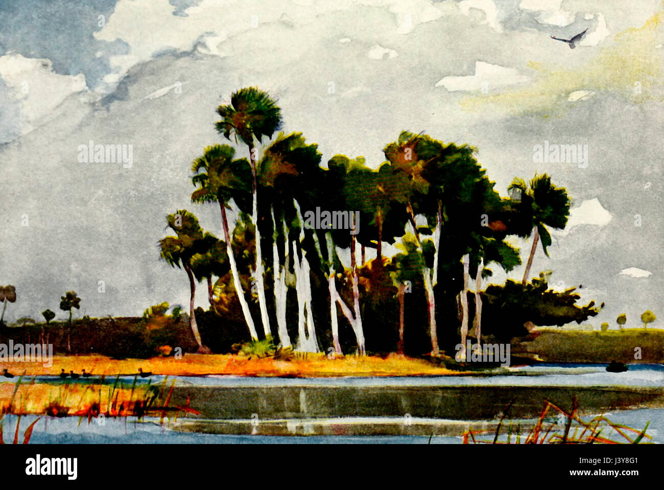 Sur le Homossa River, Floride - Aquarelle de Winslow Homer Photo Stock