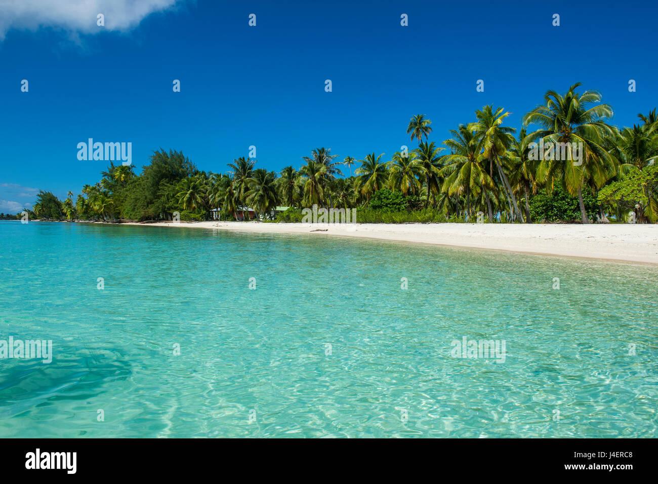 Belle plage de sable blanc bordée de cocotiers dans les eaux turquoises de Tikehau, Tuamotu, Polynésie Photo Stock