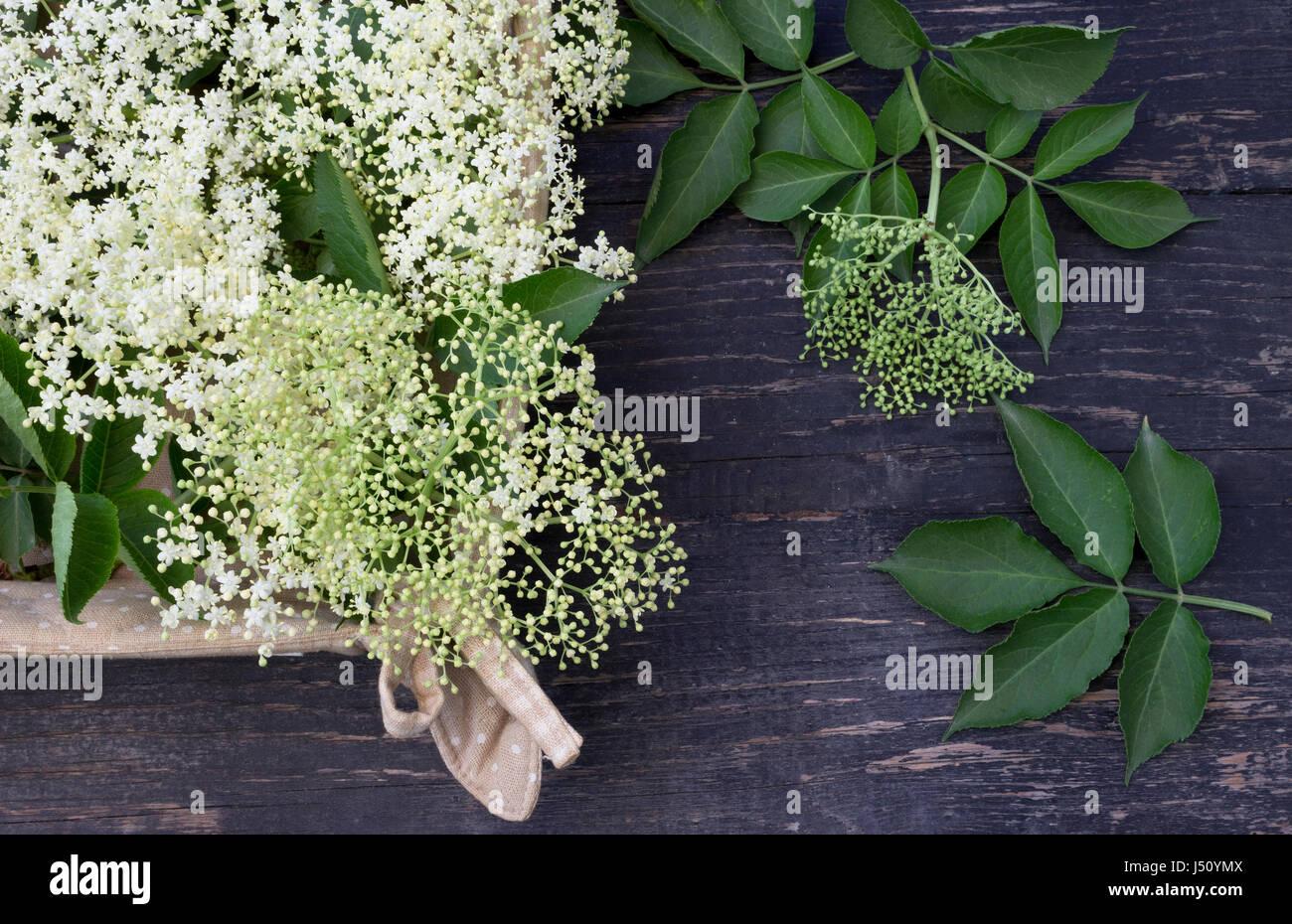 Elderflowers dans panier sur tableau noir Photo Stock