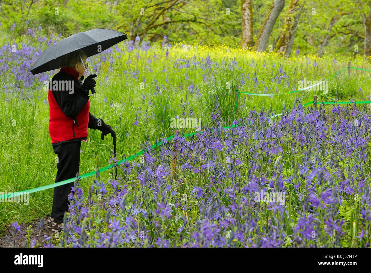 Hauts femme avec parapluie debout sur le sentier entouré de fleurs en Spring-Victoria camassies, British Columbia, Photo Stock