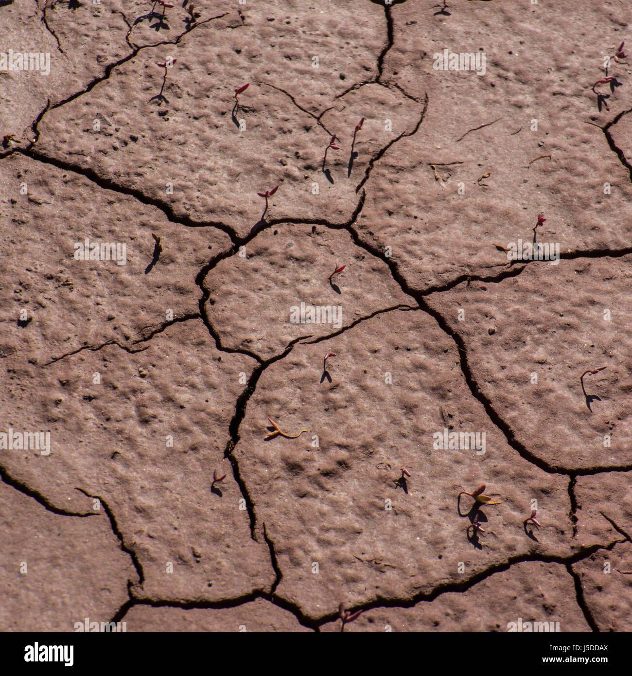 Fracture de sol dans la région de rejet d'eau industrielle Photo Stock