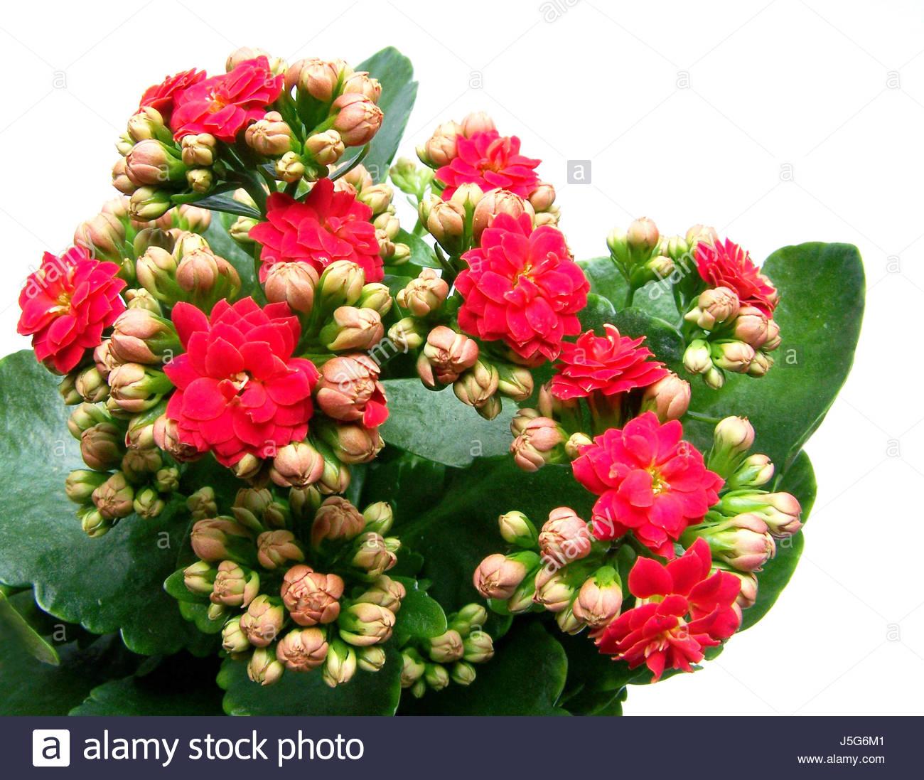 Fleur Plante Vert Feuilles Bourgeons Fleurs Plante D Interieur En