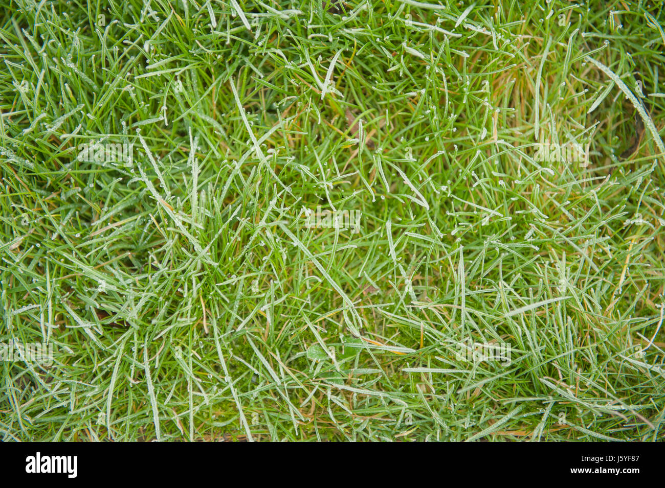 Brins d'herbe sur la pelouse au-dessus du plan Banque D'Images