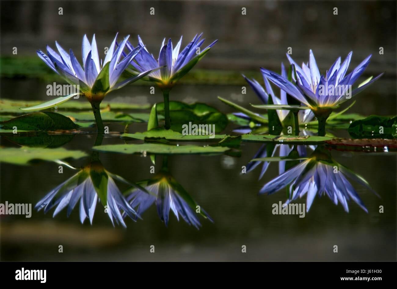 fleurs-magiques-2-j61h30