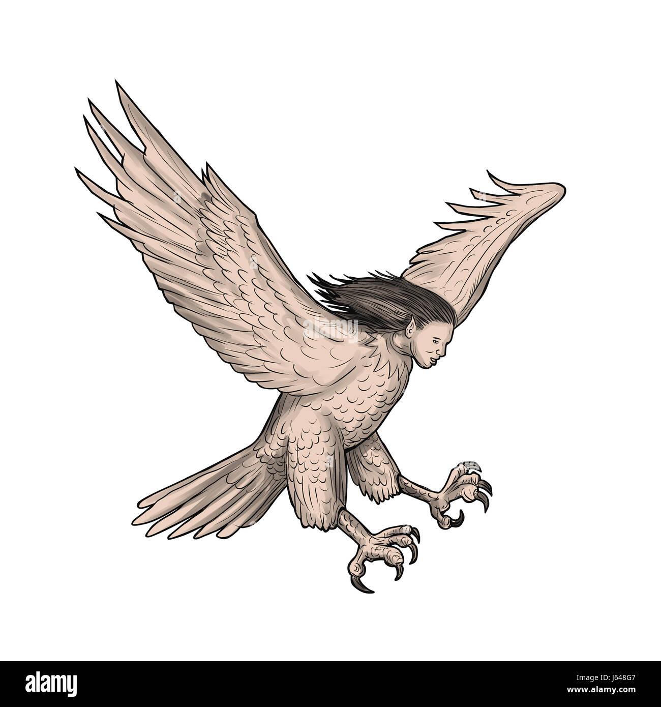 Illustration D Un Style De Tatouage En Harpie La Mythologie