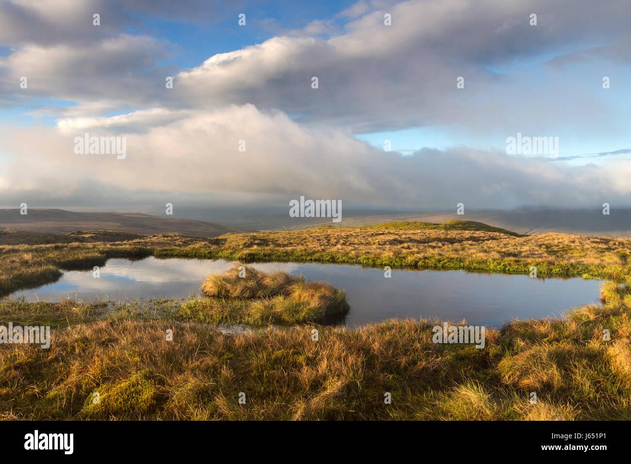 Tourbière de la lande couverte, ainsi que la prévention des inondations ces sont un excellent habitat Photo Stock
