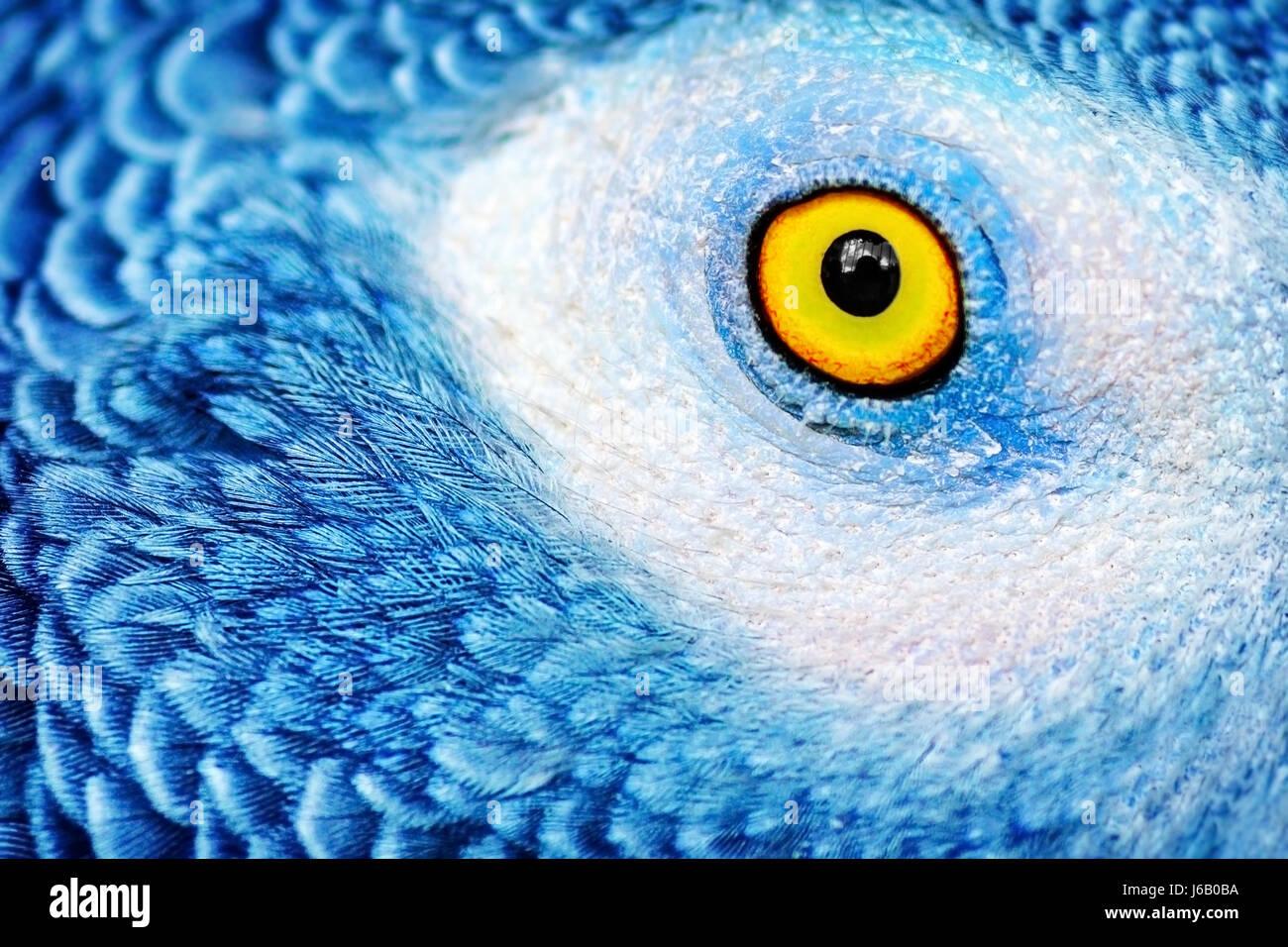 Photo Gros plan d un oeil jaune du perroquet avec plumes bleu vif ... d6695b77728