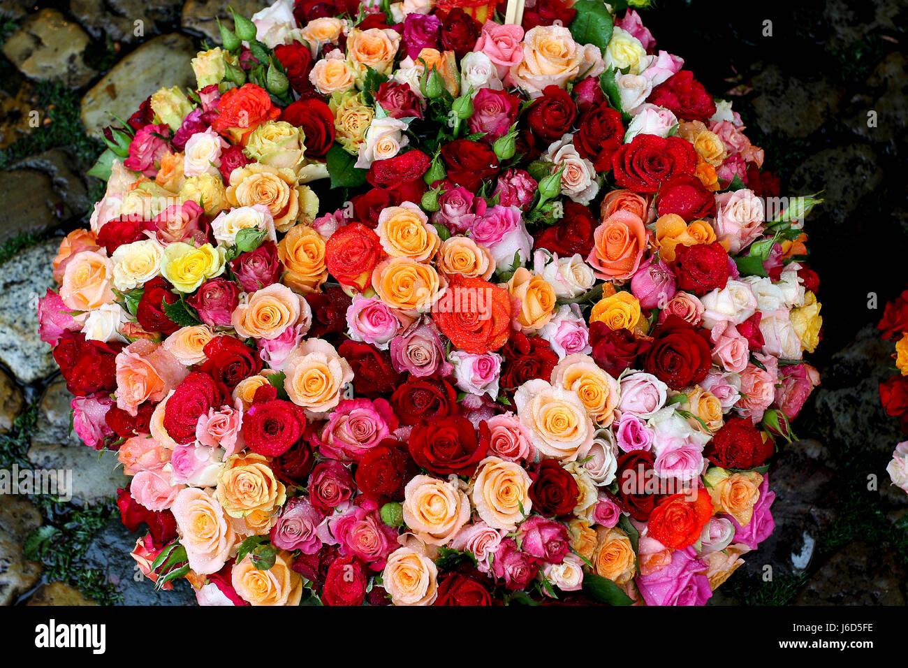 Discussion sur l'Etoile du 28 novembre   2020 - Page 15 Gros-bouquet-de-fleurs-rose-par-un-sentier-en-pierre-j6d5fe