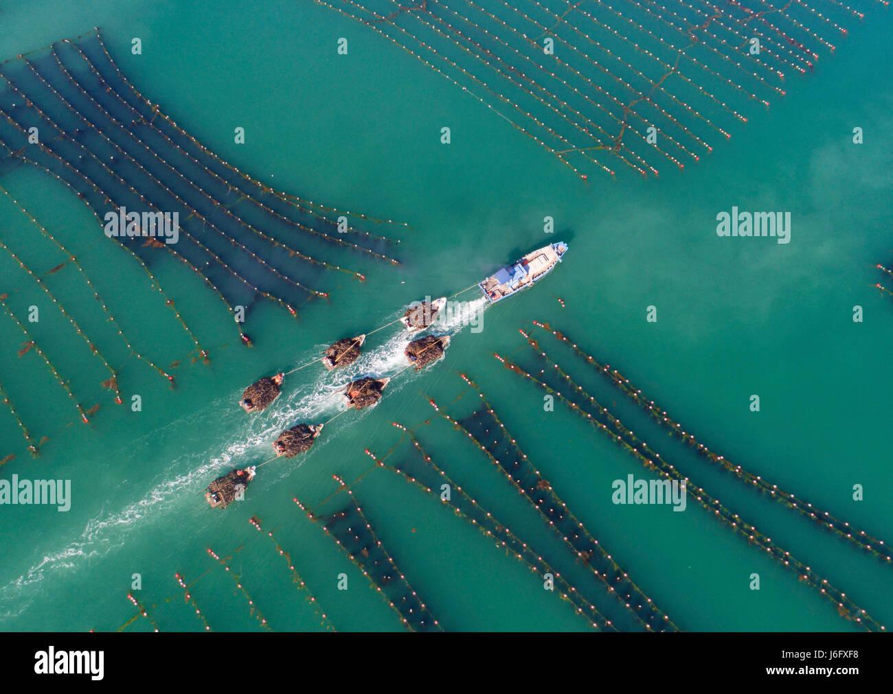 Beijing, Chine, la province de Shandong. 16 mai, 2017. Varech transport pêcheurs au port de Rongcheng, est Photo Stock